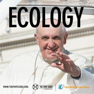 Post The Pope Video Ecology - English